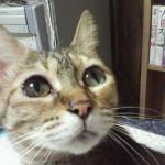 21年ありがとう!ウチのネコ『キノコ』が旅立ちました!その③