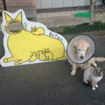 おかし工房Botan ステキなカフェやし、ネコも犬も!