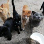 女木島のネコの話
