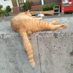 豊島のネコの話